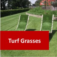 Turf Grasses 100 Hours Certificate Course