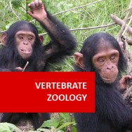 Vertebrate Zoology 100 Hours Certificate Course