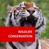 Wildlife Conservation 100 Hours Certificate Course