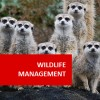 Wildlife Management 100 Hours Certificate Course