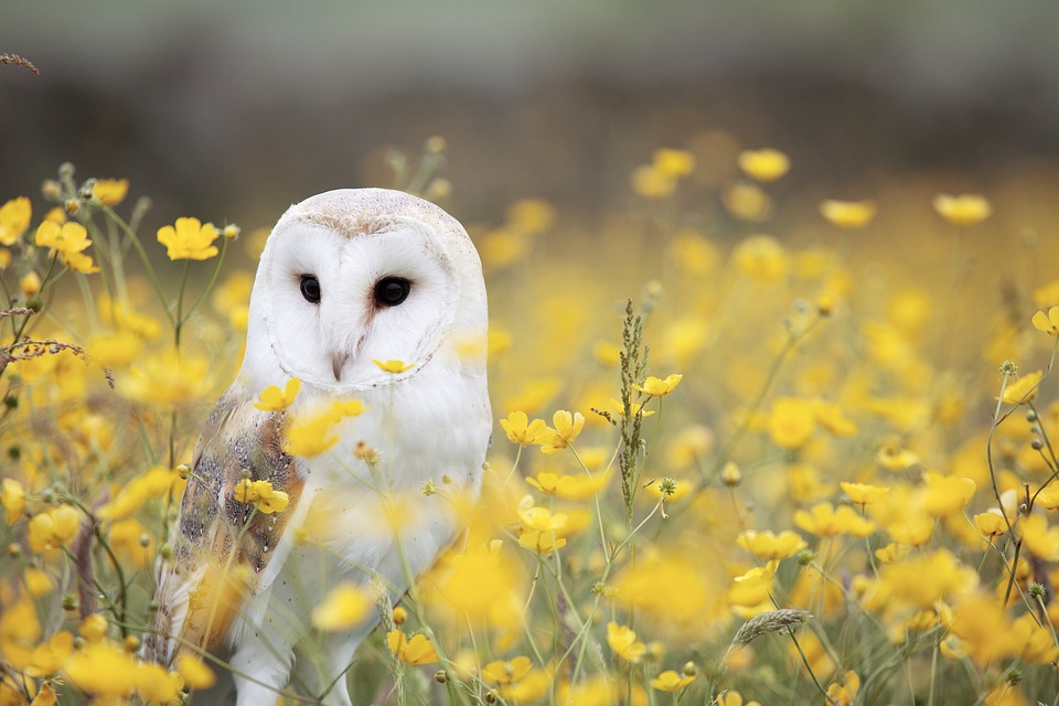 A barn owl is placed center-left in a field of plants