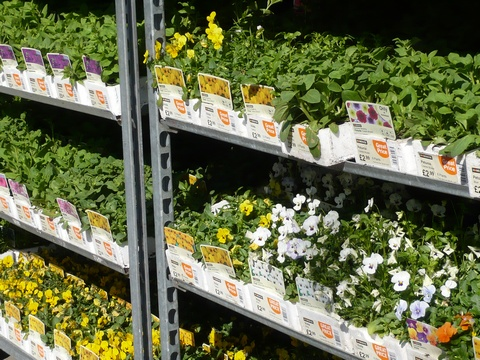 annuals sitting on nursery shelf