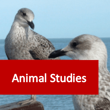 Link to animal studies courses category