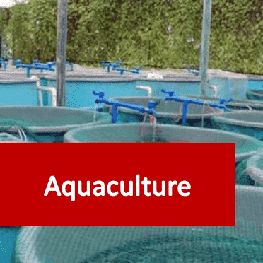 Link to Aquaculture courses category