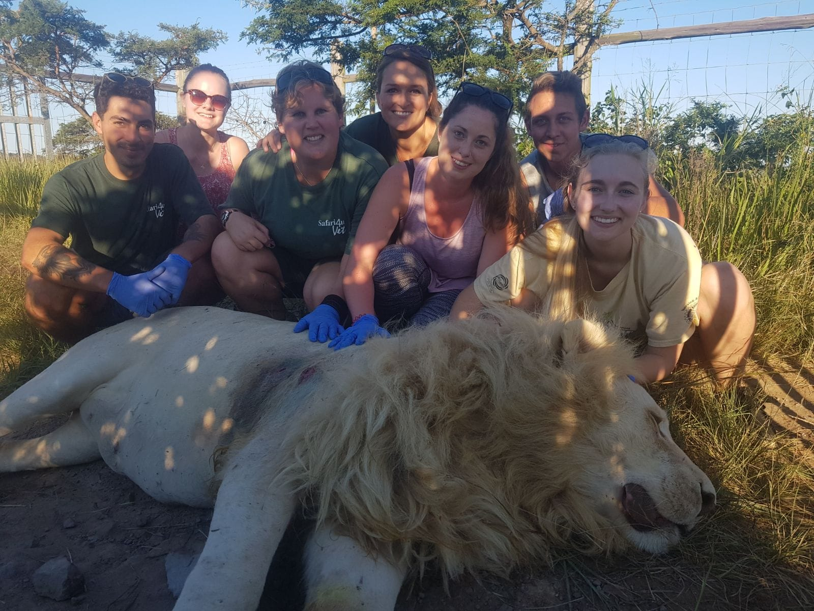 seven people helping a sick lion laying on the ground