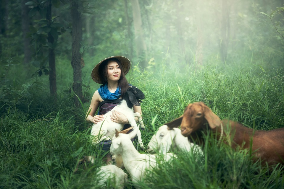woman wearing a hat and blue dress hugging a goat with other goats surrounding her in a lush, green jungle