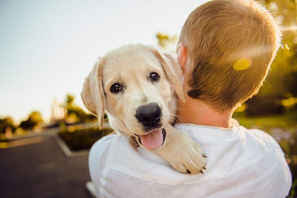 adult holdin g a golden retriever, the dog's face faces the camera while the adult is facing away