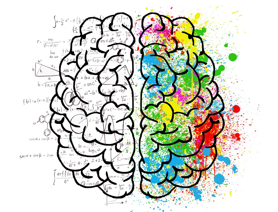 brain with formulas on the left side and colours on the other