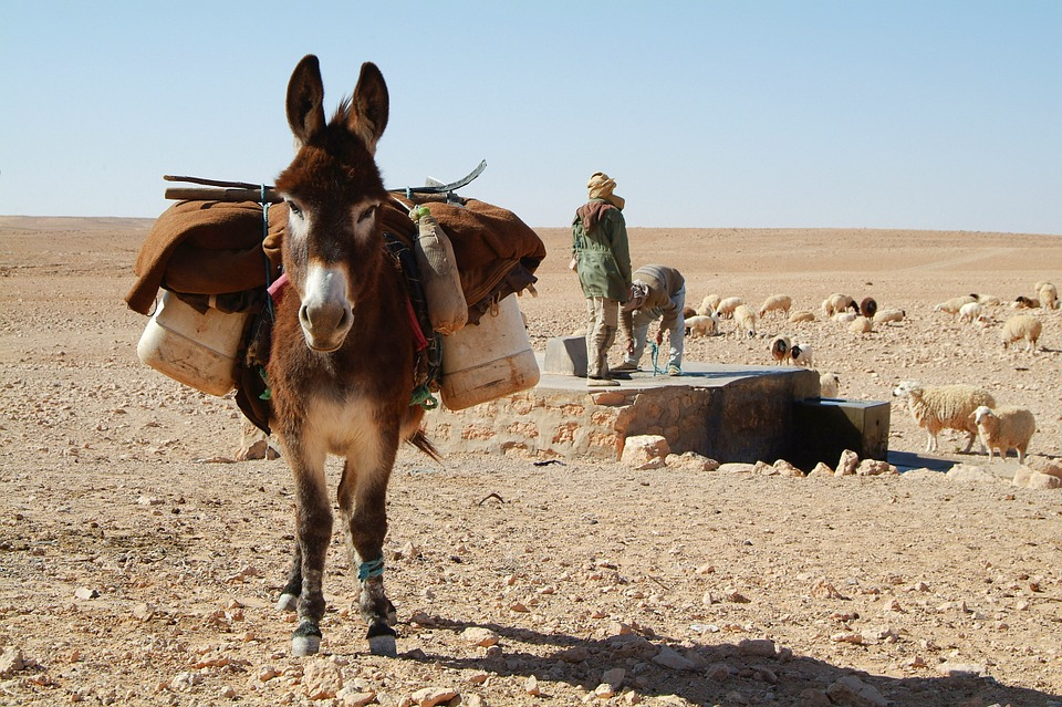 donkey with items on back in the desert. Two men are in the background by a well.
