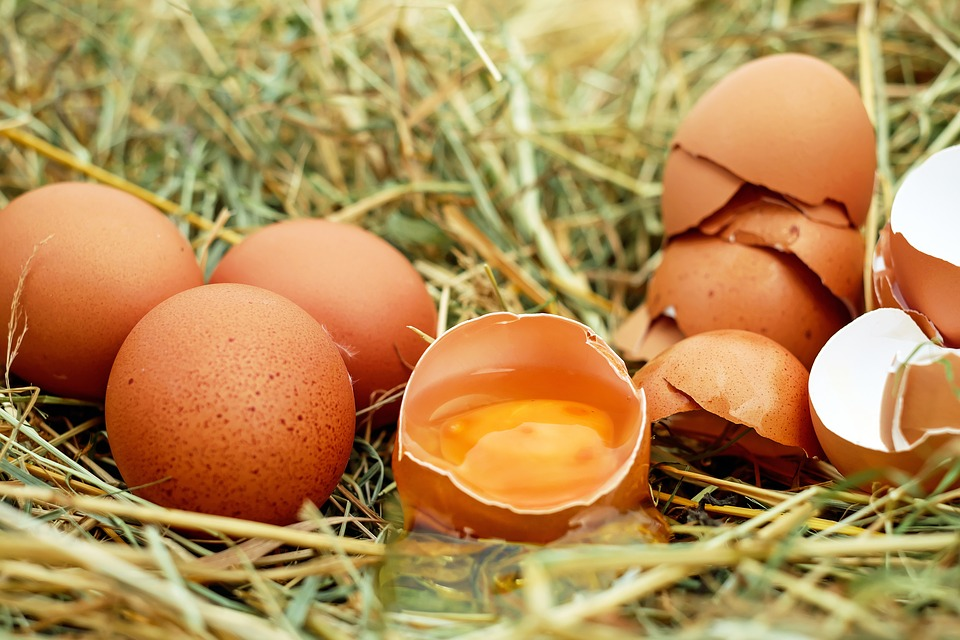 Three whole eggs lie next to a half broken egg on top of some hay beside a pile of eggshells