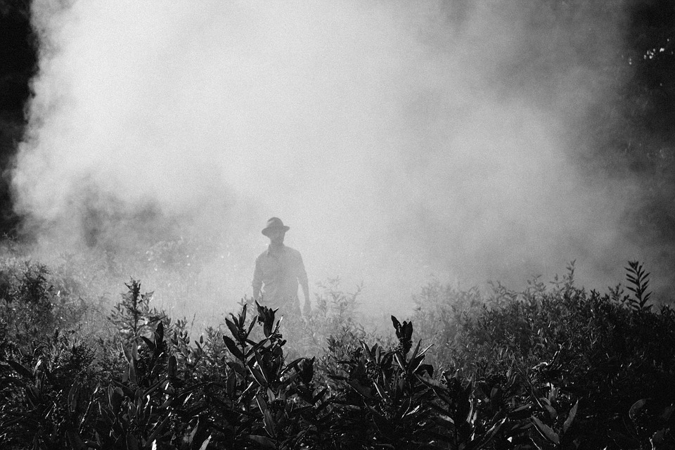 man in field with fog or mist over him