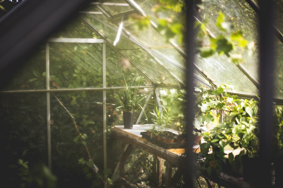 ethereal image of the inside of a greenhouse while soft sunlight shimmers through the roof