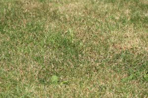 Don't panic! Just look at this soothing image of grass and breath.