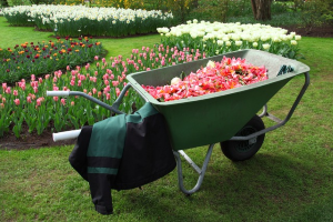 wheelbarrow with pink flower petals