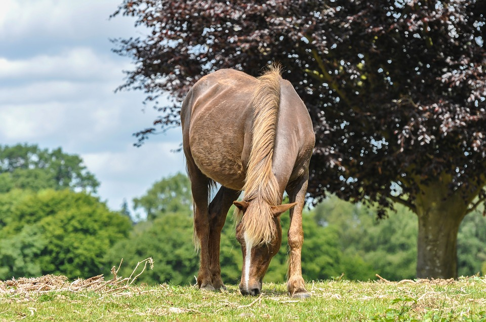 pony grazing in the new forest, england
