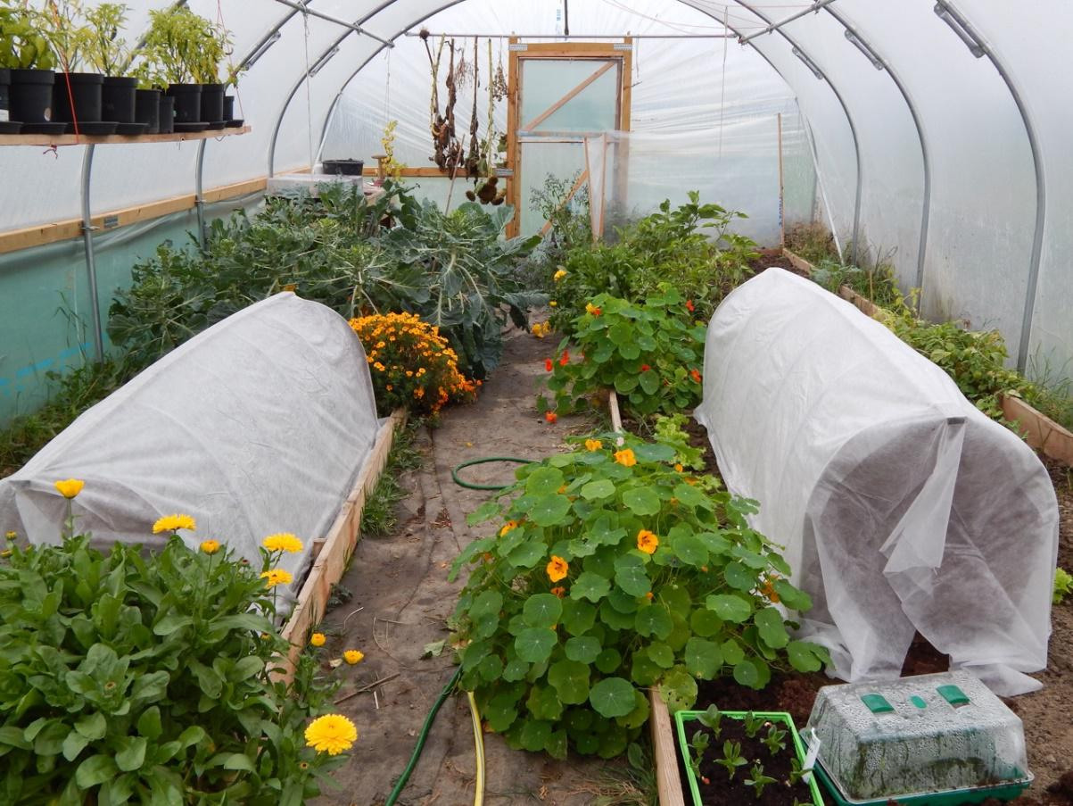 Polytunnel in October with some Protected Cultivation (Image source: Laila Noort from Sowandso)
