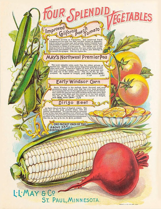 vintage vegetable catalogue