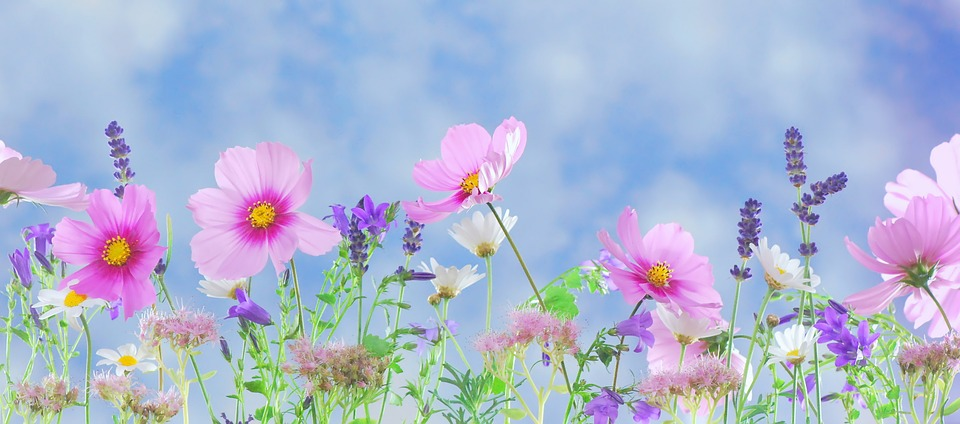 wild flowers against a soft blue sky