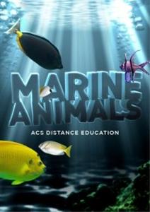 Marine animals title cover