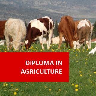 Environmental and Wildlife Management accounting diploma sydney