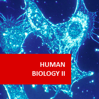 human biology coursework Study with ics learn at home at a pace that suits you  not coursework,  igcse human biology gcse mathematics igcse physics.