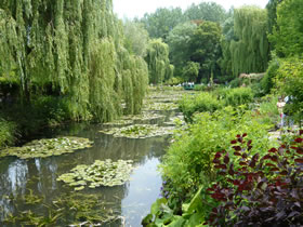 weeping willow trees beside a stream
