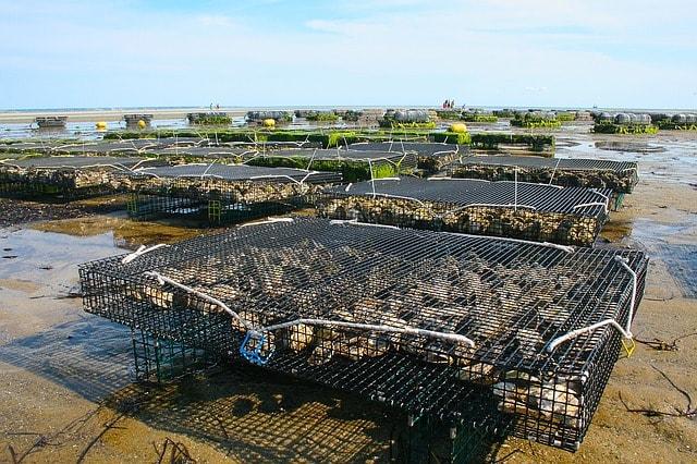 Aquaculture cages used in fish farming
