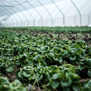 Agriculture (Alternative Farming) 1200 Hours Higher Advanced Diploma - ADL - Academy for Distance Learning