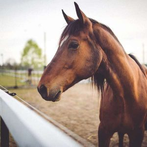 Equine Behaviour 100 Hours Certificate Course - ADL - Academy for Distance Learning