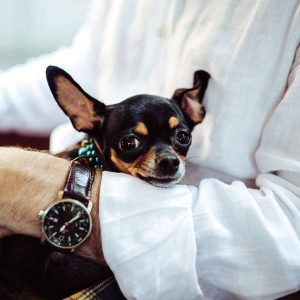 Companion Animal Studies 600 Hours Diploma - ADL - Academy for Distance Learning