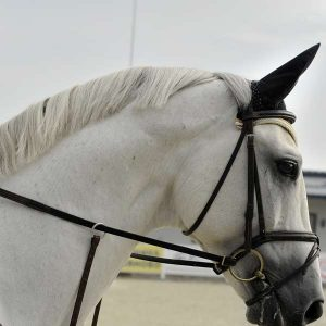 Equine Husbandry 600 Hours Diploma - ADL - Academy for Distance Learning