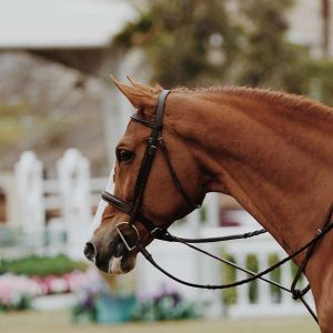 Horse Breeding 100 Hours Certificate Course - ADL - Academy for Distance Learning