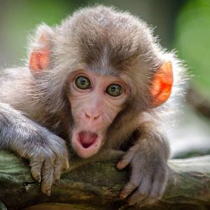Primatology 100 Hours Certificate Course - ADL - Academy for Distance Learning