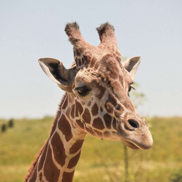 Zookeeping 100 Hours Certificate Course - ADL - Academy for Distance Learning
