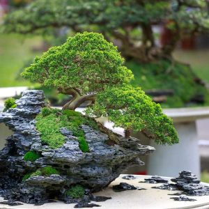 Bonsai 100 Hours Course - ADL - Academy for Distance Learning
