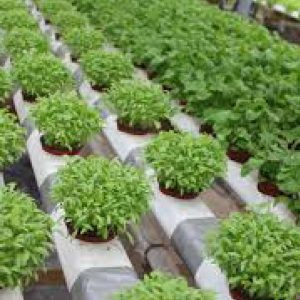 Hydroponic Supply & Consultancy  - An Introduction 100 Hours Certificate Course - ADL - Academy for Distance Learning