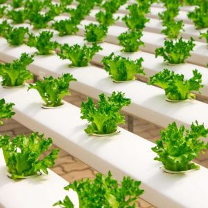 Hydroponics 600 Hours Diploma - ADL - Academy for Distance Learning