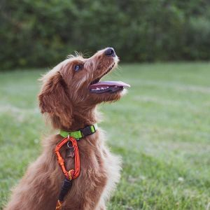 Dog Psychology and Training 100 Hours Certificate Course - ADL - Academy for Distance Learning