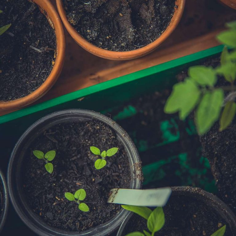 RHS Level 3 Certificate in the Principles of Garden Planning - ADL - Academy for Distance Learning