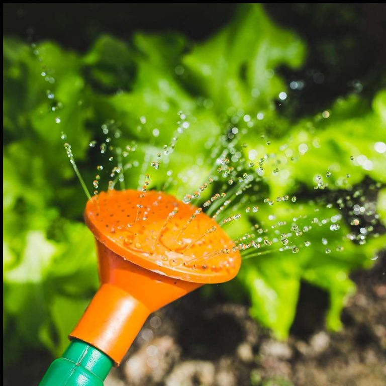Hydroponics I 100 Hours Certificate Course - ADL - Academy for Distance Learning