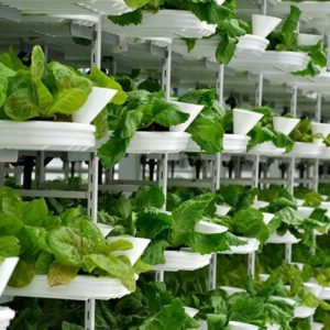 Hydroponics III 100 Hours Certificate Course - ADL - Academy for Distance Learning
