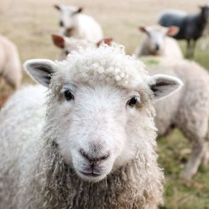 Agriculture (Livestock) 800 Hours Advanced Diploma - ADL - Academy for Distance Learning
