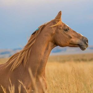 Applied Management (Horses) 600 Hours Diploma - ADL - Academy for Distance Learning