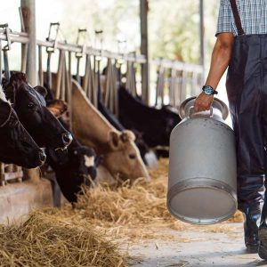 Dairy Cattle 100 Hours Certificate Course - ADL - Academy for Distance Learning