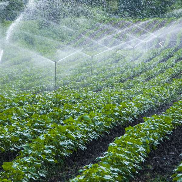 Irrigation - Crops 100 Hours Certificate Course - ADL - Academy for Distance Learning