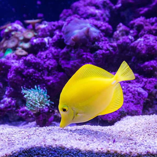 Aquarium Management 100 Hours Certificate Course - ADL - Academy for Distance Learning
