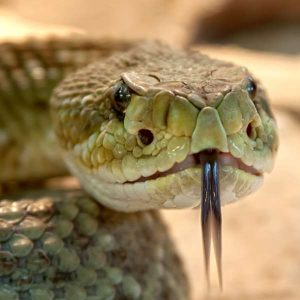 Herpetology 100 Hours Certificate Course - ADL - Academy for Distance Learning