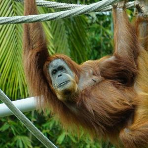 Zoo Keeping 600 Hours Diploma - ADL - Academy for Distance Learning