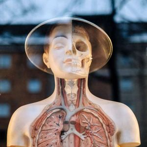 Human Physiology II 100 Hours Certificate Course (Pre-Medical Program)   - ADL - Academy for Distance Learning