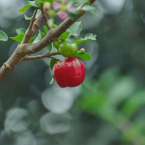 Home Fruit Growing 100 Hours Course - ADL - Academy for Distance Learning
